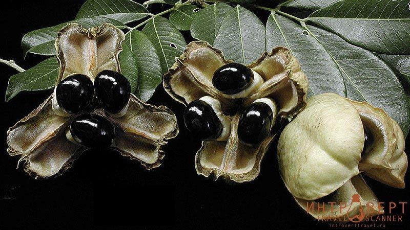 экзотические фрукты -  Аки (блигия)