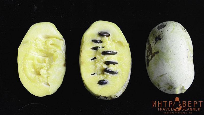 экзотические фрукты - Азимина (пау-пау, банановое дерево)