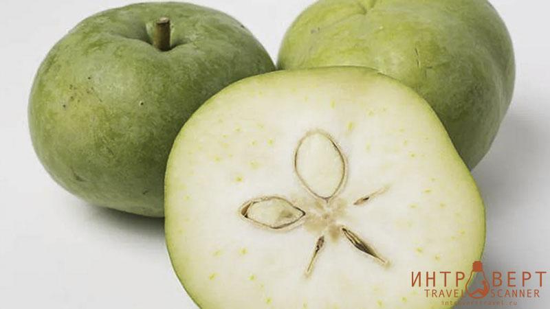 Сапотэ белое (казимироа съедобная, мексиканское яблоко)