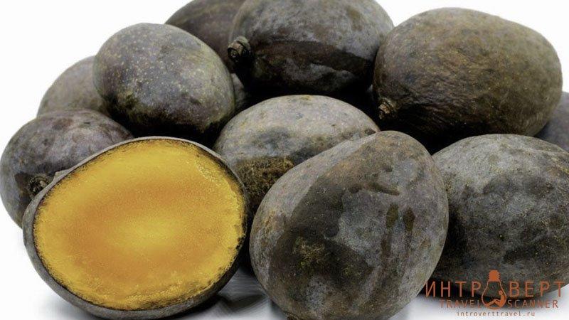 Кастури (Kalimantan Mango, Mangga Cuban, Pelipisan и Mangifera casturi, дикое манго)