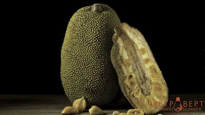 Джекфрут (хлебное дерево, канун)