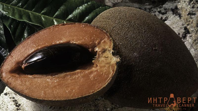 Сапотэ Мамэ (мармеладный плод, мамэ, путерия)