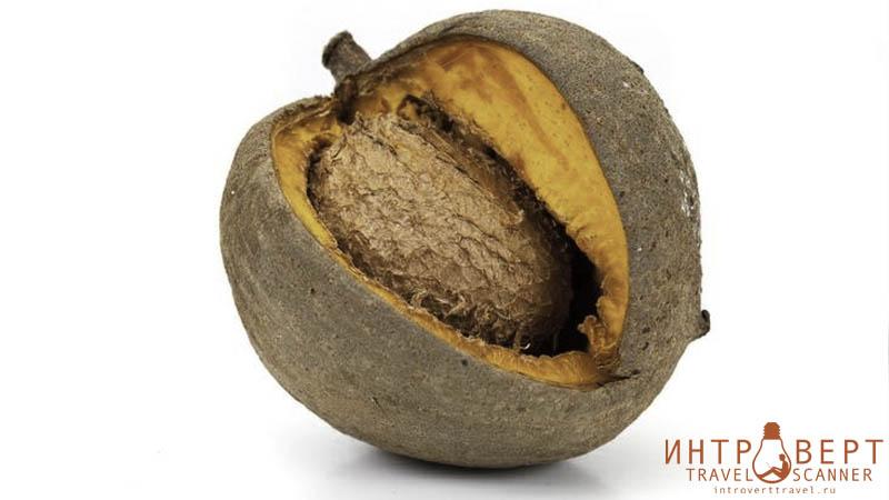 Маммея (антильский абрикос, американский абрикос)