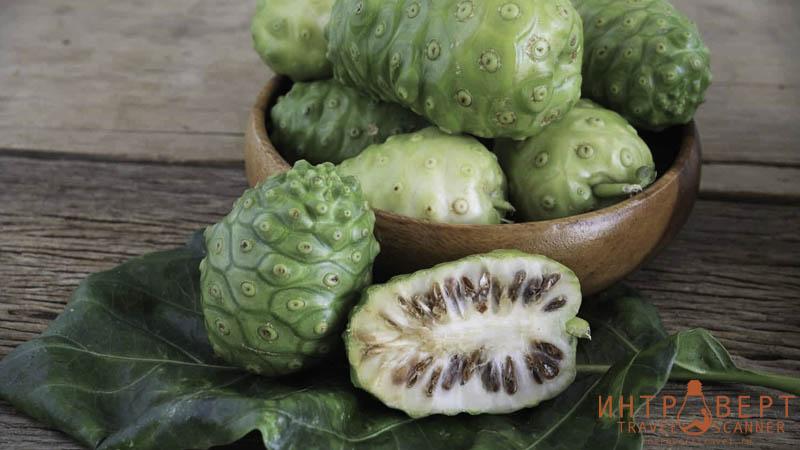 Нони (Сырный фрукт, Большая моринга, Полезное дерево, Индийская шелковица, Нону)
