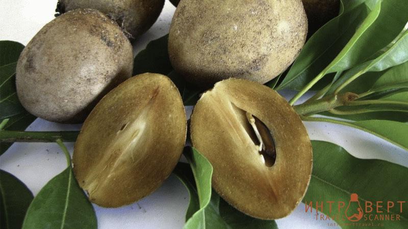 Саподилла (древесный картофель, сапотилла, чику, ахра)