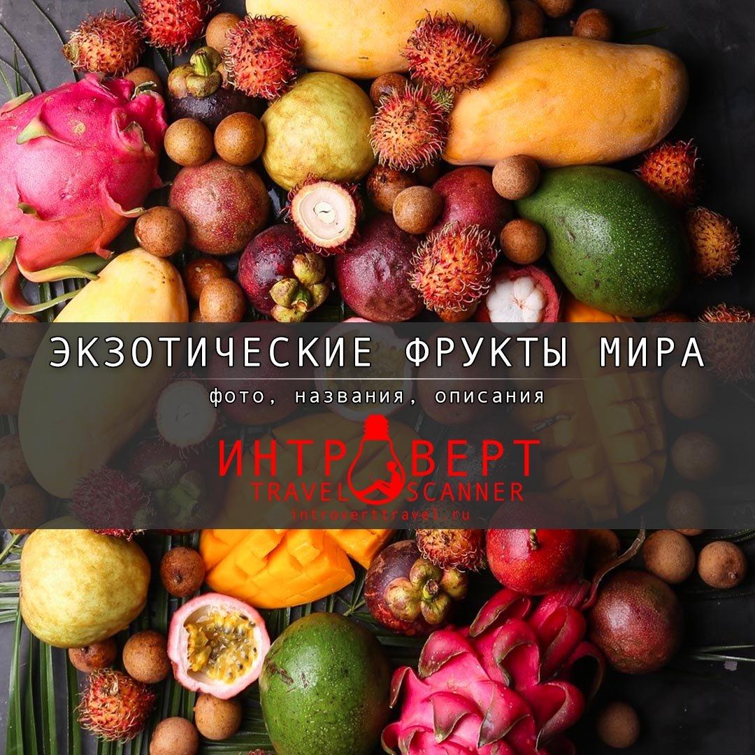 Экзотические фрукты мира: фото, названия, описания